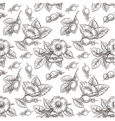 seamless pattern with dog rose vector image