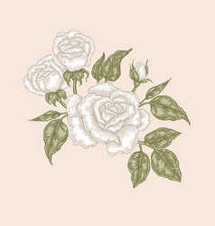 white rose flowers and leaves in vintage style vector image vector image