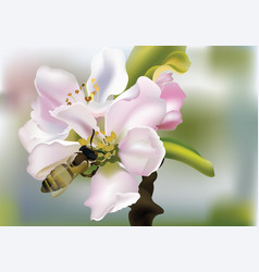 cherry flowers realistic with vector image vector image
