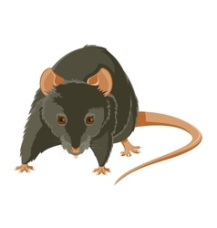 Evil rat vector image