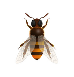 Honey bee isolated icon vector