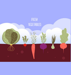 vegetable garden organic and healthy food veggies vector image