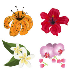 flower tropic flora flowering tropical vector image