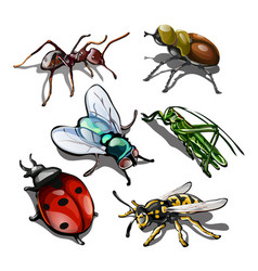 set of insects isolated on white background vector image