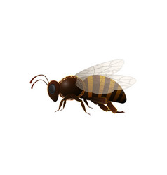 Striped honey bee side view icon vector