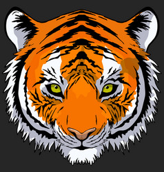Tiger head drawing vector