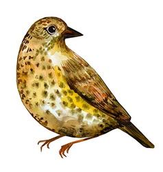Watercolor painting bird vector