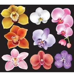 Collection of orchid flower vector image vector image