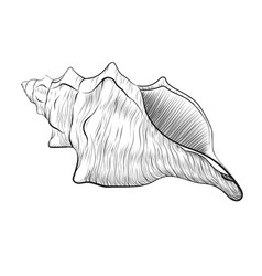 sea shell hand drawn black linear vector image vector image