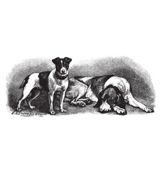 Fox terrier and fox hound vintage vector