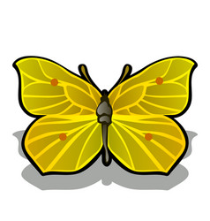 the butterfly is made from the pulp of ripe lemon vector image
