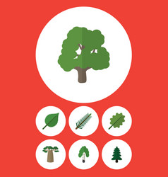 Flat icon nature set of alder linden baobab and vector