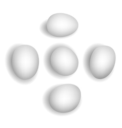 5 different photorealistic white chicken eggs vector image
