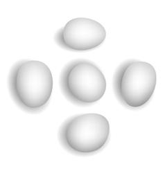 5 different photorealistic white chicken eggs vector