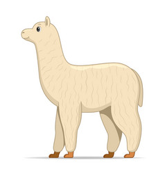 Alpaca animal standing on a white background vector