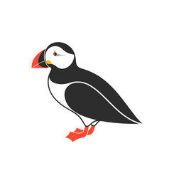 Atlantic puffin vector