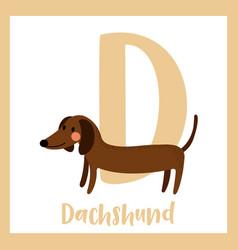Letter d vocabulary dachshund vector