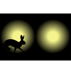 headlight rabbit vector image