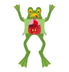 Anatomy frog internal organs toad amphibian vector