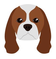 cavalier king charles spaniel avatar vector image
