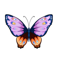 Colorful butterfly vector