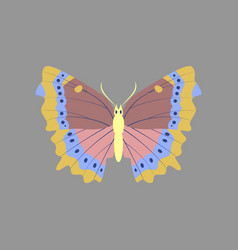Colorful icon of butterfly isolated on gray vector