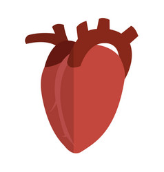 Human organ icon vector