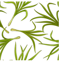 Lemongrass plant pattern vector