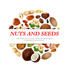 Poster of nuts beans and fruit seeds vector