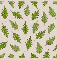 seamless pattern with poppy leaves vector image