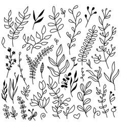 set floral elements - leaves vector image
