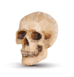 triangle human skull vector image vector image