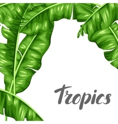 Background with banana leaves Image of decorative vector