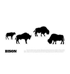 black silhouette of bison herf on white background vector image