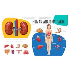 Human anatomy infographic template vector