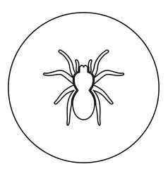 Spider or tarantula black icon outline in circle vector