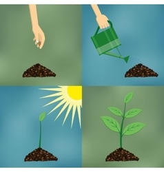 Planting process in flat design vector image