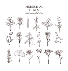 Hand Drawn Medical Herbs Collection vector