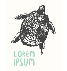 Hand drawn turtle logo template vector image