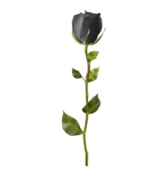 realistic black rose eps 10 vector image