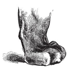 Sheathed tiger foot vintage vector