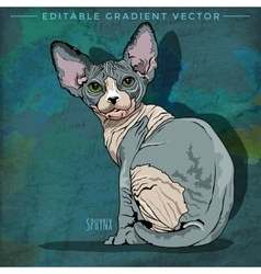 Sphynx cat vector