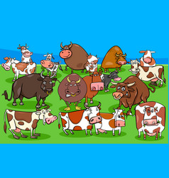 cows and bulls farm animal characters group vector image