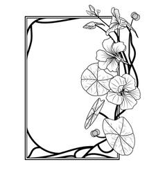 Frame with nasturtium vector