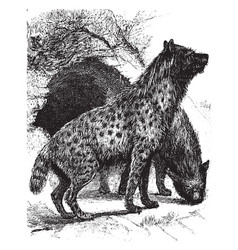 Hyenas vintage vector