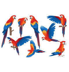 Set adult parrot red-and-green macaw ara vector