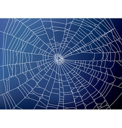 spider web2 resize vector image vector image
