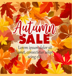 Autumn sale poster of leaf vector