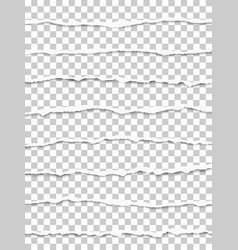oblong torn transparent paper strips vector image