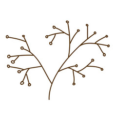 brown contour graphic of stem with seeds vector image vector image